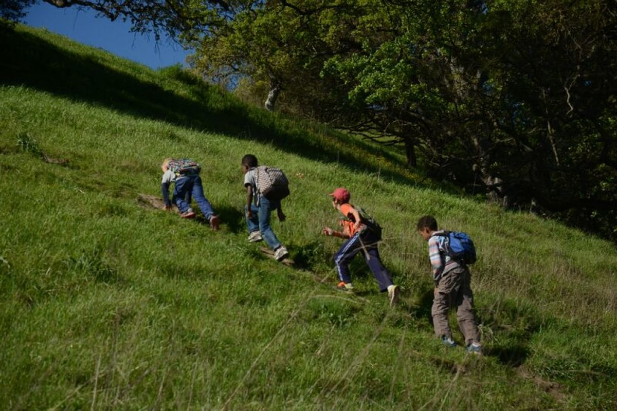 Animal Tracking in the Hills