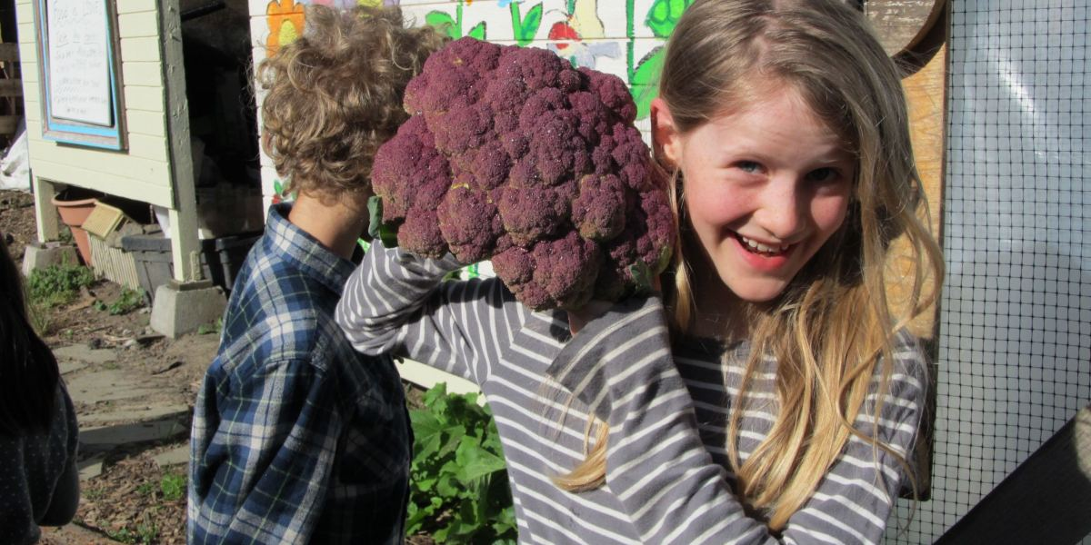 Cauliflower Success