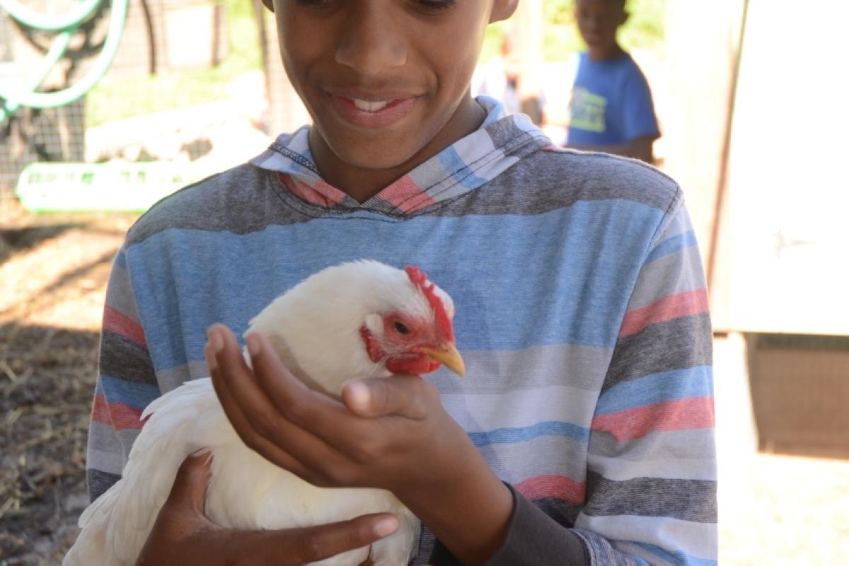 Chicken Interaction