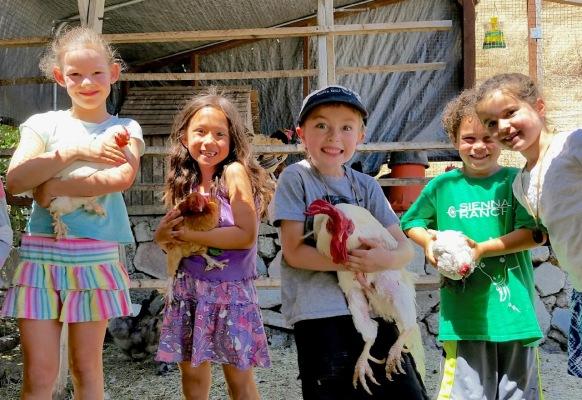 Farm Animal Interaction