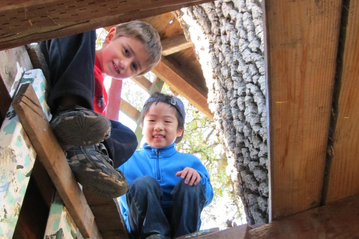 Tree Fort Exploration
