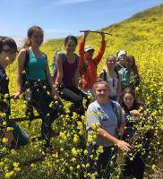 Wild Mustard vs. the Sages