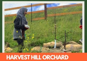 Harvest Hill Orchard