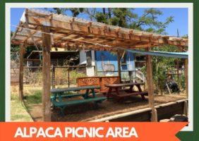 Alpaca Picnic Area